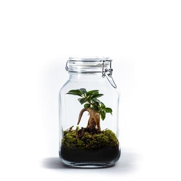 Ecosystem Medium - MIX 3 soorten