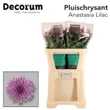 Artikel #360275 (Ana Lilac 8: CHR G ANASTASIA LILAC Decorum)