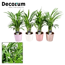 Collectie Moments - Dypsis lutescens (Areca) in pot Coco