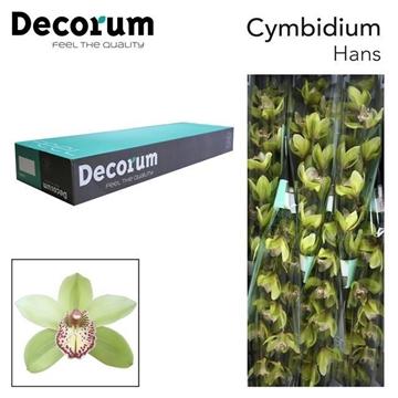 CYMB T Hans Decorum