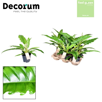 Philodendron Narrow Escape Feel Green (Decorum)