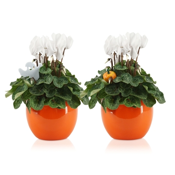 "Cyclamen in Oranje ""Lisa"" keramiek met HALLOWEENstekers"