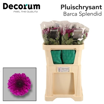 CHR G BARCA SPLENDID Decorum