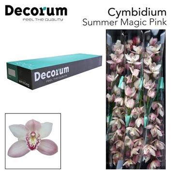 CYMB T Summer pink decorum