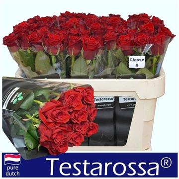 R Gr Testarossa  A2 70