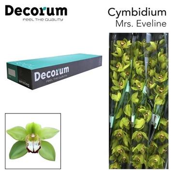 CYMB T Eveline Decorum