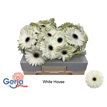 GE GR WHITE HOUSE  water 577