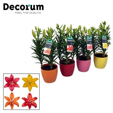 Lilium Aziaat Mix 3pp DECOPOT