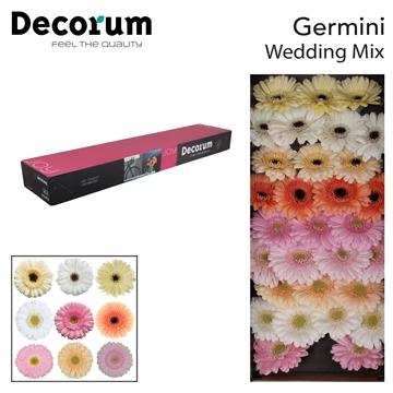 Ge Mi doos Wedding Mix