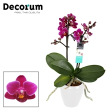Decorum Purple princes 2 tak vertakt Wit Keramiek