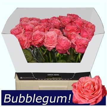 R Gr Bubblegum! A2 55 XL