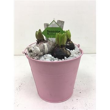Emmer hyacinth roze