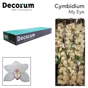 CYMB T My eye Decorum