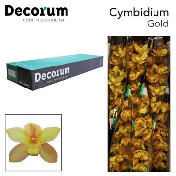 CYMB T Gold Decorum