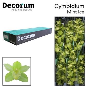 CYMB T Mint ice Decorum