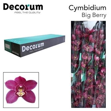 CYMB T Big berry Decorum