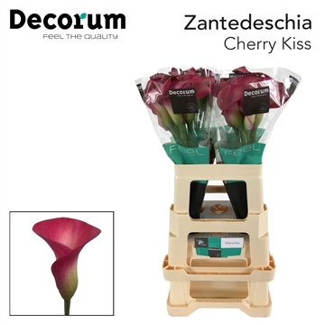 Zantedeschia Cherry Kiss