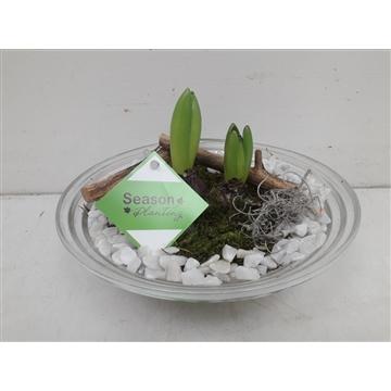 Glas ribbelschaal hyacinth