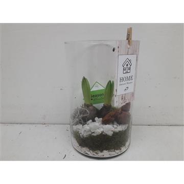 Glas cilinder hyacinth