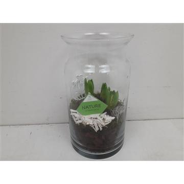 Glas XXL hyacinth