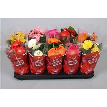 Gerbera Colourgame Valentijn/moederdag