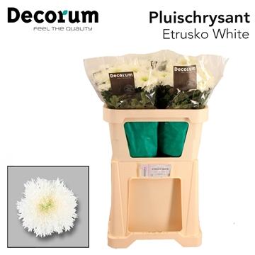 Chr G Etrusko White