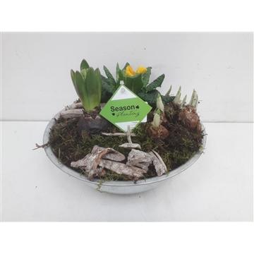 Zinkk schaal narcis, hyacinth, primula