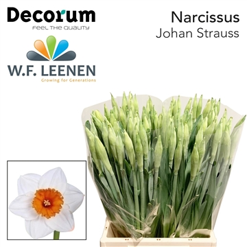 Narcis Johan Strauss