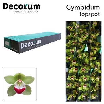 CYMB T Topspot Decorum