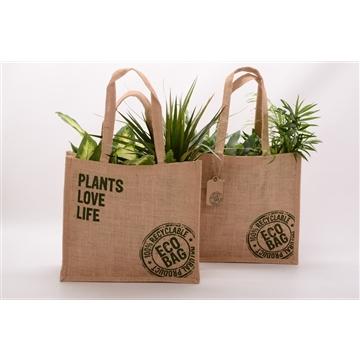 Overig kamerplanten gemengd Jute tas