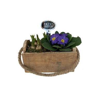 """VJR657-3 arr. Primula/Muscari in box """"Mia"""" with rope handle"""