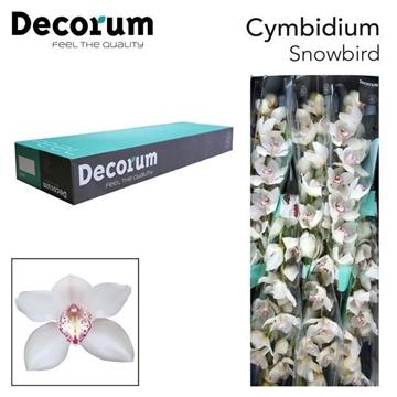 CYMB T Snowbird Decorum