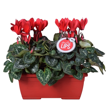 MoreLIPS® Cyclamen in rood duobakje