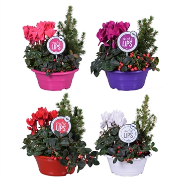 MoreLIPS® Winter trio in schaal 'December Mix'