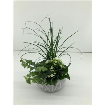 Keramiek schaal met 3 planten