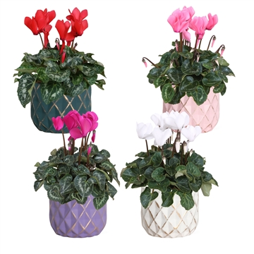 Collectie 'Passion' - Cyclamen in keramiek Veerle