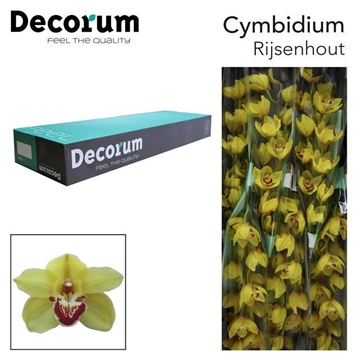CYMB T Rijsenhout decorum