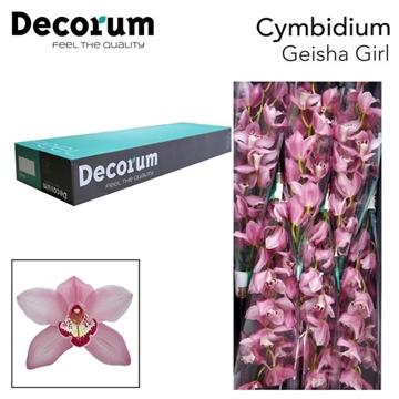 CYMB T Geisha girl Decorum