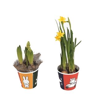 Bollenmix Hyacinth en Narcis in potcover miffy/nijntje ®