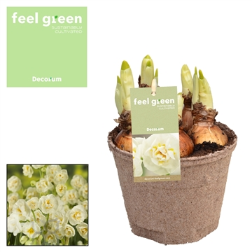 Narcis Bridal Crown FEEL GREEN