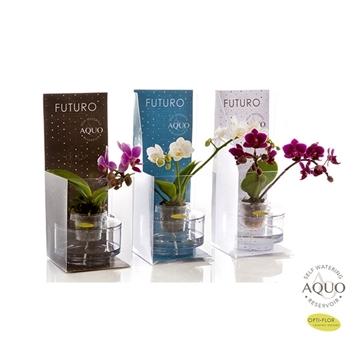 Futuro mix in aquo + gift box