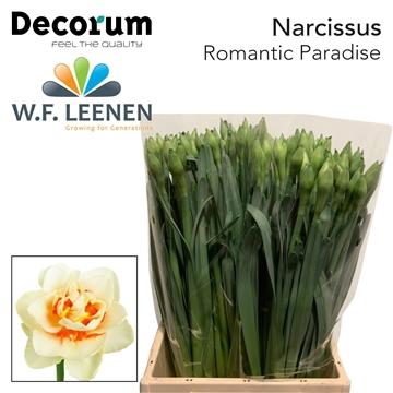 Narcissus Romantic Paradise