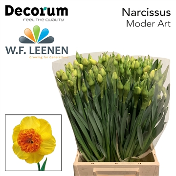 Narcissus Modern Art