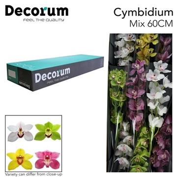 CYMB T Gemengd Decorum