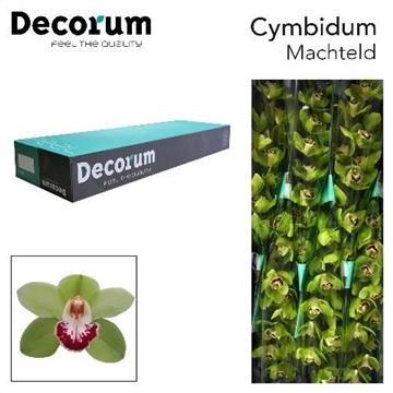 CYMB T MACHTELD Decorum 9