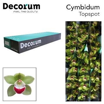 CYMB T TOP SPOT Decorum 9