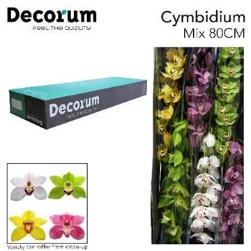 CYMB GEM Decorum x6