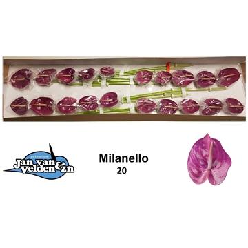 Milanello 20