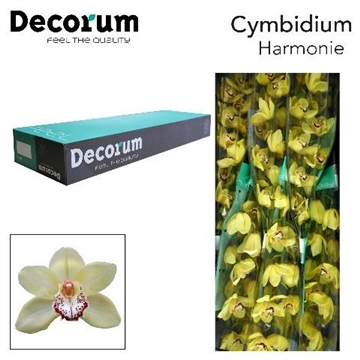 CYMB T HARMONIE Decorum 6