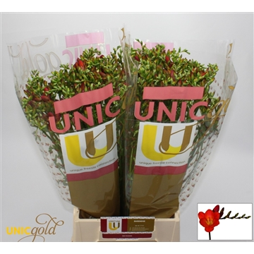 Unicgold Red passion  Barendse